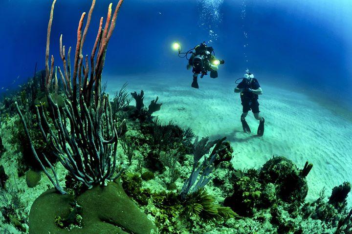 Sapevate che la Posidonia Oceanica non è un'alga ma una pianta acquatica? La Calabria,…