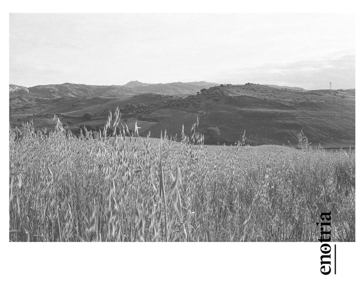 Pensa, scrivi, invia. #Postcard! Condividi con chi ami le #CartolinedallaCalabria di #CantinaEnotria