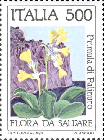 La Primula Palinuro è una specie endemica delle coste tirreniche e calabresi. Una specie…