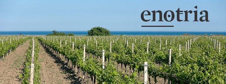 Cantina Enotria updated their cover photo