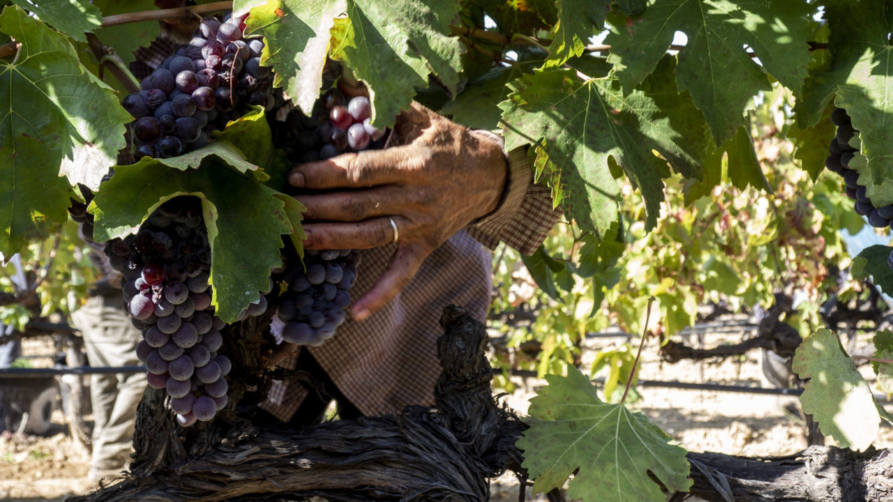 uomini e vigne