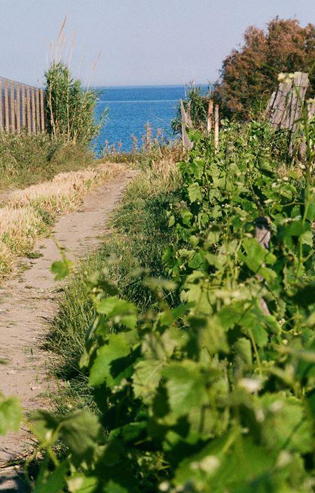 Qui tutte le strade portano al mare. #Ionio #CantinaEnotria #NaturainCalabria #CiròMarina #Calabria